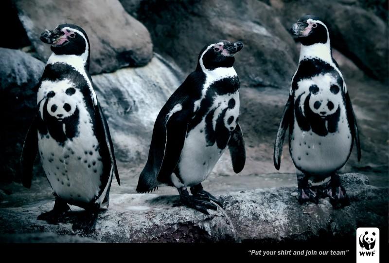 wwf-penguin-arara-print-354742-adeevee.jpg
