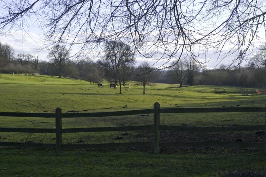 chawton-fields-1.jpg