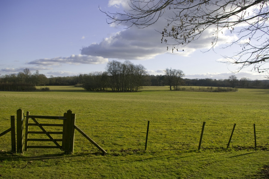 chawton-house-view-from-one-of-the-gravel-paths.jpg